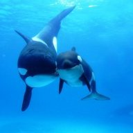 Orca9000
